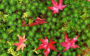 Макро: мох, листья, макро