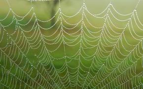 Макро: паутина, капли, роса, макро