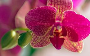 Макро: Орхидеи, цветы, макро, природа