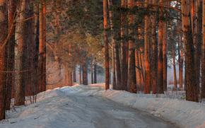 Обои Природа: Сосны, снег, деревья, лес, природамарт, весна, утро, прогулка, дорога, Кировская область, Россия