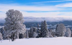 Пейзажи: зима, снег, деревья, горизонт, пейзаж