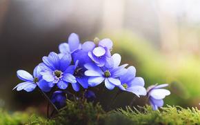 Макро: мох, цветы, макро