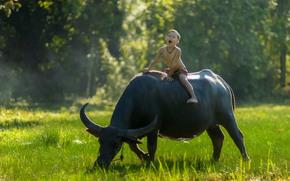 Настроения: Thailand, Тайланд, мальчик, буйвол, наездник, настроение