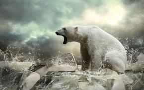 Животные: белый медведь, зверь, медведь, льдины, лёд
