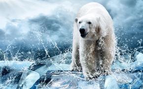 Животные: белый медведь, полярный медведь, медведь, лёд, брызги
