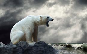 Животные: белый медведь, полярный медведь, животные