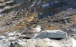 Животные: чайка, песчанник, булыжник