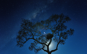 Космос: Космос, звёзды, луна, ночь, Млечный Путь, дерево, птица