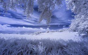 Рендеринг: поле, деревья, небо, пейзаж