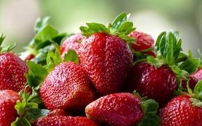 Разное: клубника, ягоды, макро