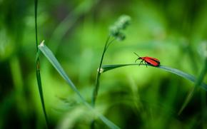 Макро: трава, жук, макро