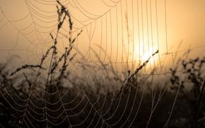 Макро: паутина, капли, макро, закат