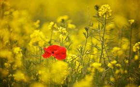 Макро: цветы, растения, макро