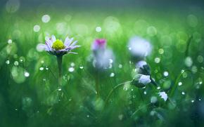 Макро: трава, роса, цветы, макро