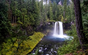 �������: Sahalie Falls, Williamette National Forest, �������, ���, �������, �������