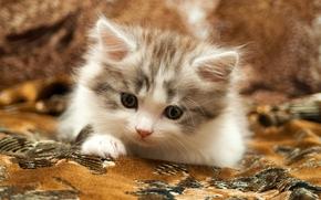 Животные: котёнок, малыш, ковёр