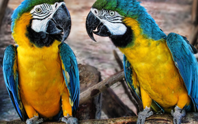 Животные: Ара, попугаи, птицы