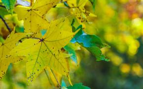 Макро: осень, листья, ветка, макро