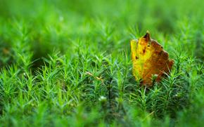 Макро: мох, лист, макро
