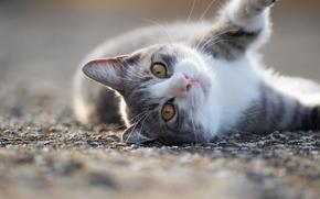 Животные: кошка, котейка, мордочка, взгляд
