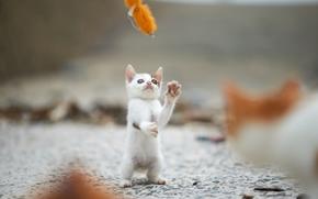 Животные: котёнок, малыш, игра, забава, боке