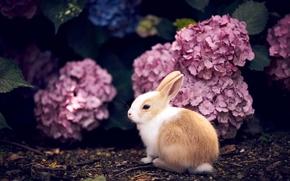 Животные: кролик, крольчонок, малыш, цветы, гортензия