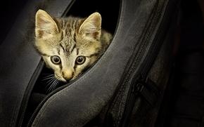 Животные: сумка, котёнок, взгляд