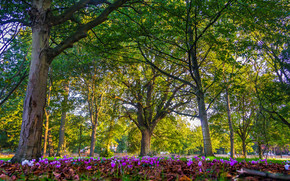 Природа: London, England, Лондон, Англия, парк, деревья, цветы