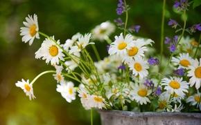Цветы: ромашки, лето, букет