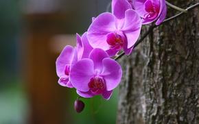 Цветы: орхидея, ветка, макро