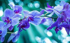 Цветы: орхидея, экзотика, ветка, макро