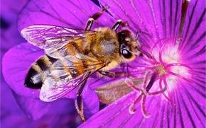 Макро: цветок, пчела, макро