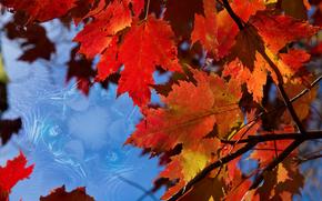 Макро: ветки, листья, осень, макро