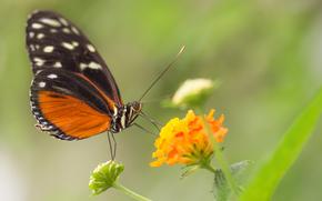 Макро: бабочка, цветок, макро