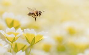 Макро: цветы, пчела, макро