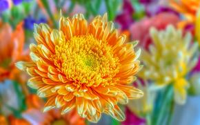Цветы: астра, цветок, макро, флора