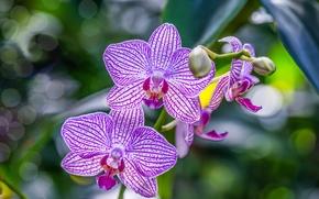Макро: орхидея, экзотика, ветка, макро