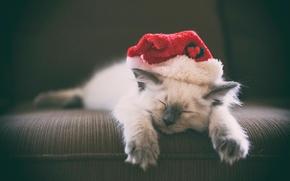 Животные: спящий котёнок, котёнок, сон, колпак