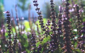 Цветы: Растение, трава, макро