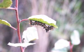 Макро: Гусеница, макро, растение