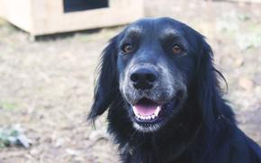 Животные: Собака, пес, черное