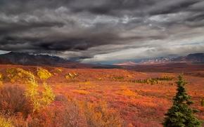 Пейзажи: Denanli National Park, аляска, горы, деревья, тучи, осень, пейзаж