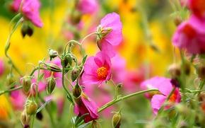 Макро: цветы, бутоны, макро