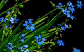 Макро: цветы, флора, макро