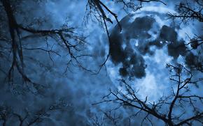 Рендеринг: планета, деревья, небо