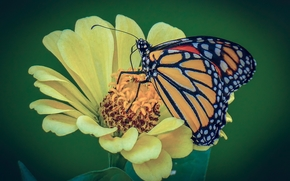 Макро: цветок, бабочка, макро