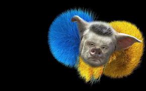 Настроения: Голубой, жёлтый, морда, пятак, рыло.