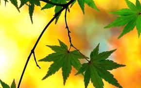 Макро: ветка, листья, макро