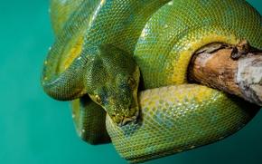 ��������: Python, �����, ����