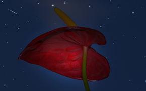 Цветы: Ночь, звёзды, цветок, крупный план